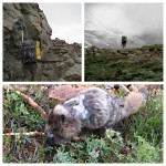 Lots of marmots observing our hike to Camp Muir.
