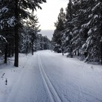 XC Ski Trails in West Yellowstone, MT.