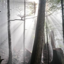 Sun, trees, and fog on the S2SG Evac Route